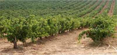 El Vino y el cambio climático